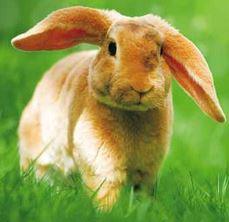 Kaninchen und Hase