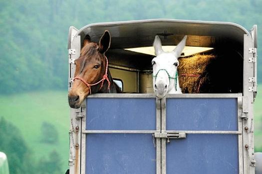 was muss ich beim transport von pferden beachten. Black Bedroom Furniture Sets. Home Design Ideas