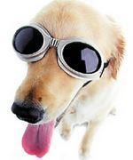 Doggles - sehr zu empfehlen als Hundezubehör