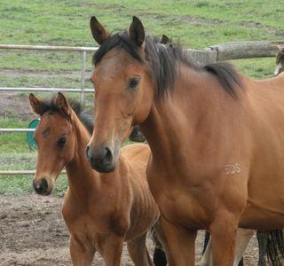 Pferd und Fohlen Foto