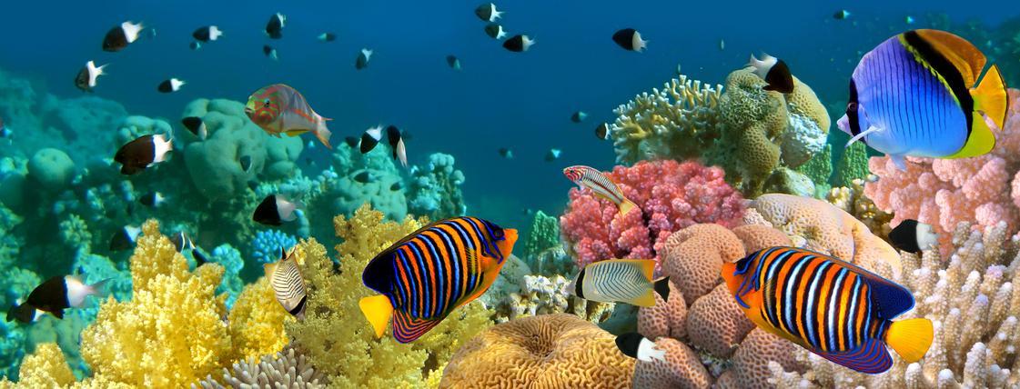 Bild von Fischen im Aquarium