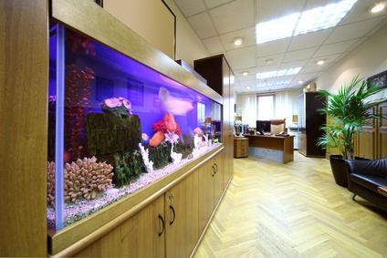 aquarium einrichten so geht s. Black Bedroom Furniture Sets. Home Design Ideas