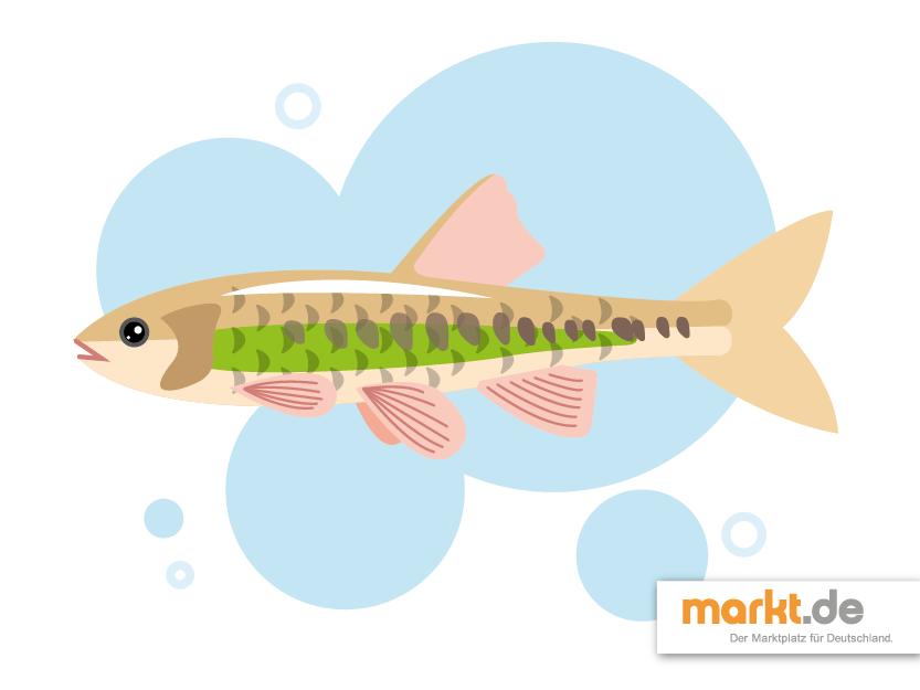 Beliebteste fische f r den gartenteich for Teichfische schwarz