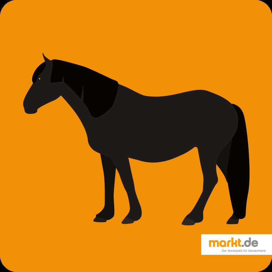 Merens Pferd