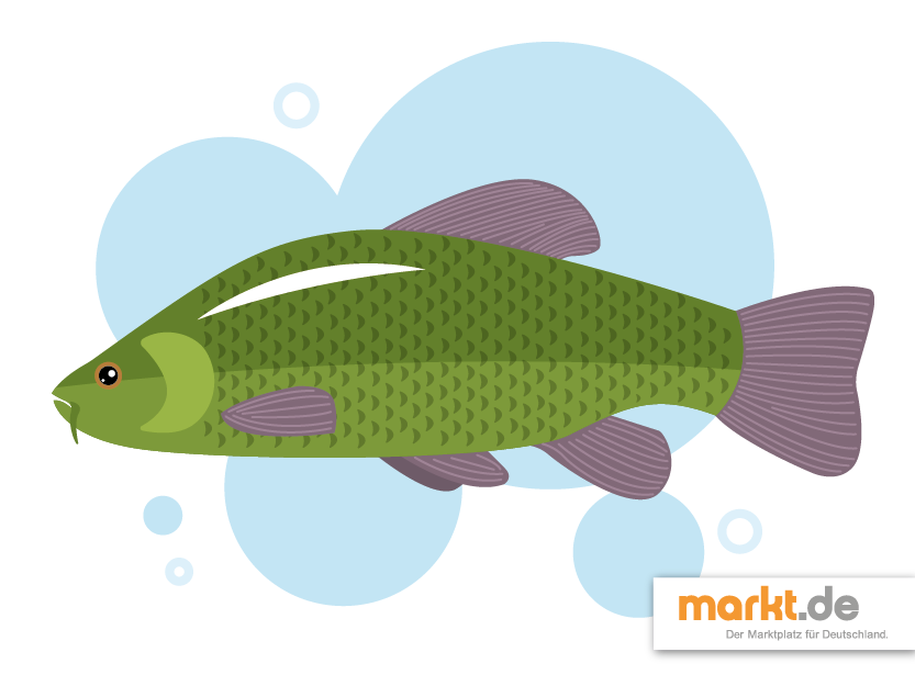 Beliebteste fische f r den gartenteich for Besondere teichfische