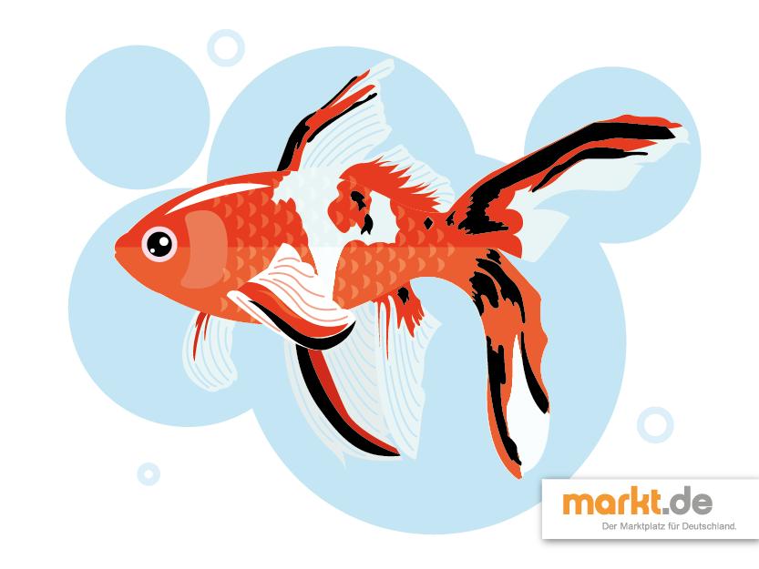 Beliebteste fische f r den gartenteich for Was fressen teichfische