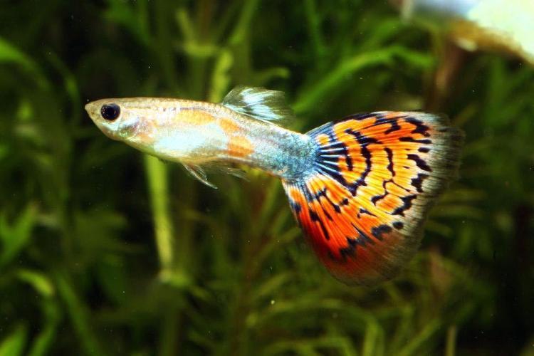 Wie z chte ich fische im aquarium fischzucht tipps von for Kleine zierfische