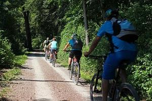 Bild Radfahrergruppe im Wald