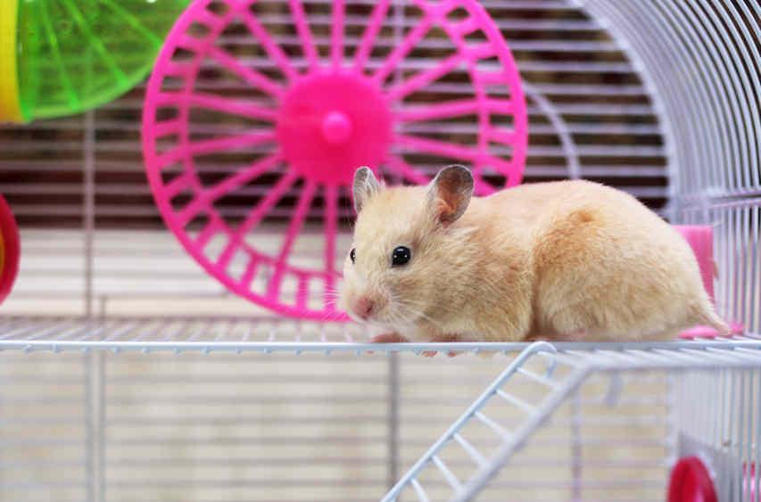 Spielzeug Rund Um Den Neuen Superhelden: Was Tun Gegen Bissigen Hamster?