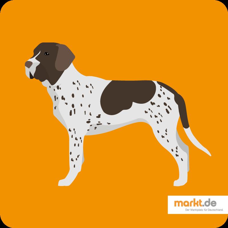 Bild Altdänischer Vorstehhund