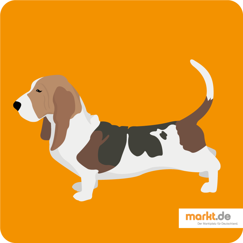 Bild Bassethound