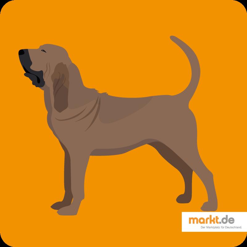 Bild Bloodhound
