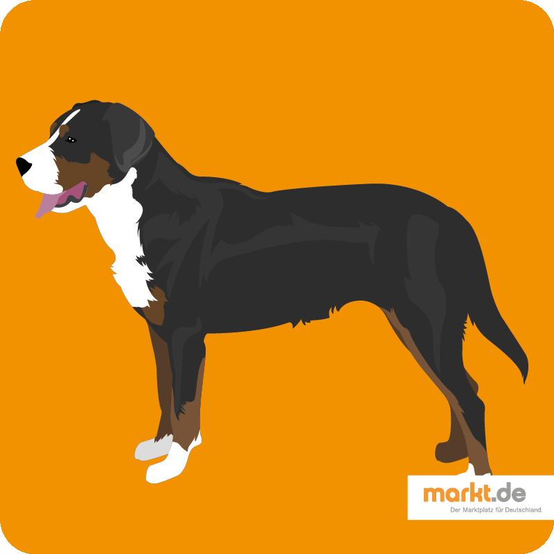 Großer Schweizer Sennenhund