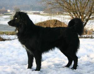 Doggy Im Stehen