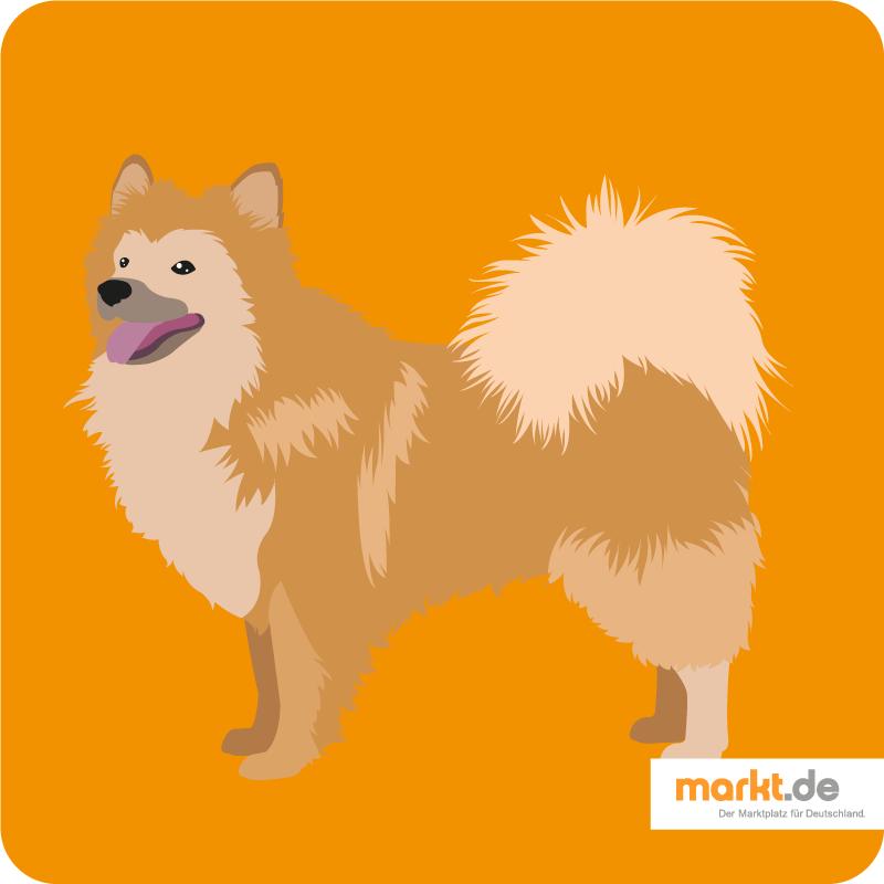 Islandhund