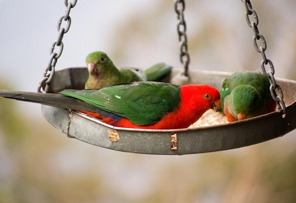Papageien ratgeber spielzeug für wellensittiche und