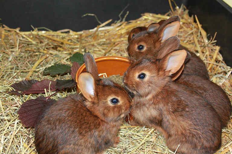 typische kaninchenkrankheiten in unserem ratgeber marktde