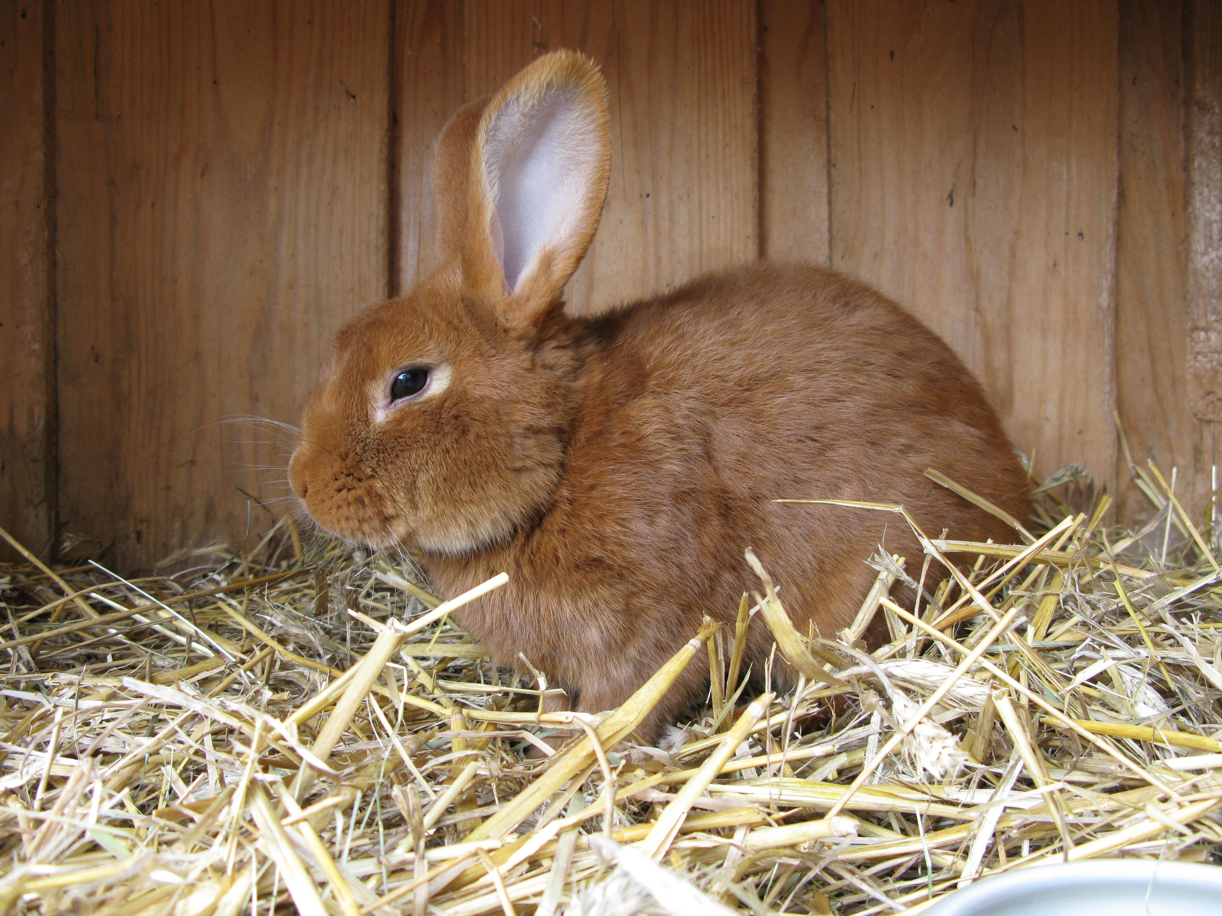 Bild von Kaninchen