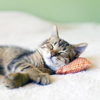 was tun wenn die katze stark haart ursachen f r das haaren und tipps f r den halter. Black Bedroom Furniture Sets. Home Design Ideas