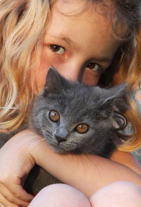 Bild von Britisch Kurzhaar Katze mit Kind