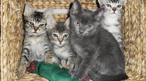 Bild Vier Katzen im Korb
