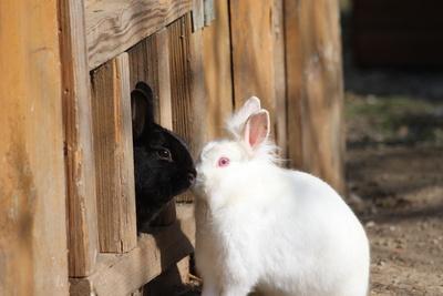 Bild von zwei Kaninchen