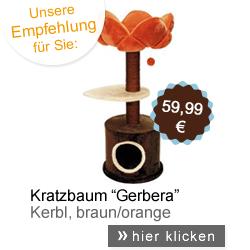Kratzbaum Gerbera