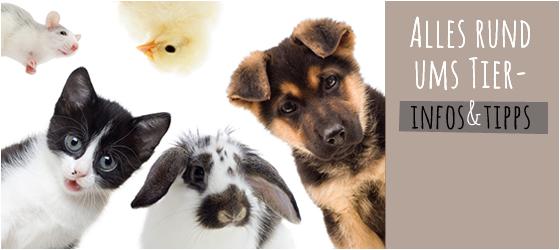 Ratgeber Tiere