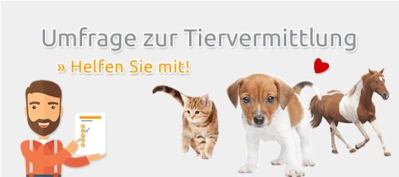 Umfrage Tiervermittlung