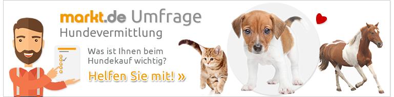 Umfrage Tiervermittlung Hund