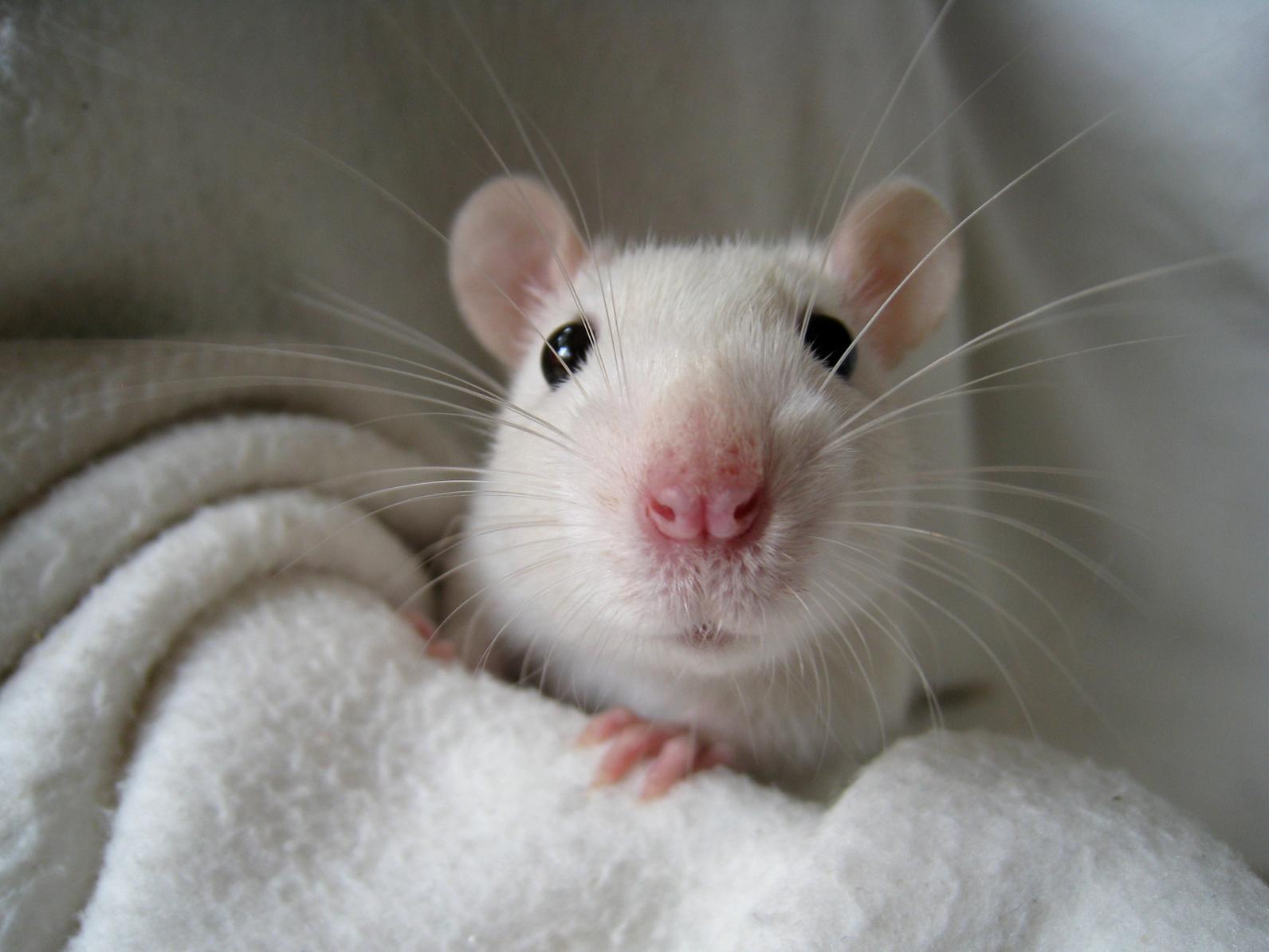 Beste Spielothek in Ratten finden