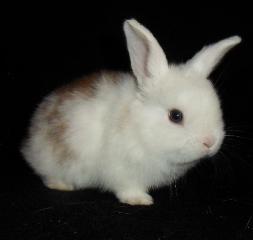 kaninchen, ratgeber
