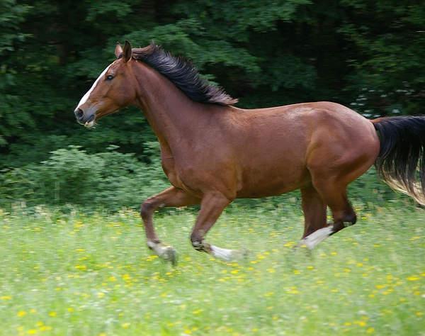 ehorses pferde kaufen