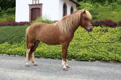 pflege von pferden