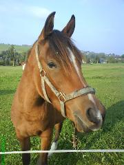 ratgeber f r pferdekauf vor und nachteile einer reitbeteiligung oder eines pflegepferdes. Black Bedroom Furniture Sets. Home Design Ideas