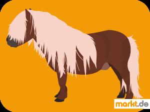 Bild braunes Pony