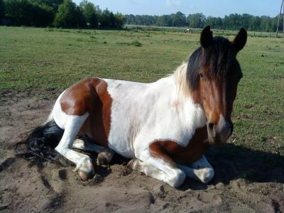 spielen mit pferden