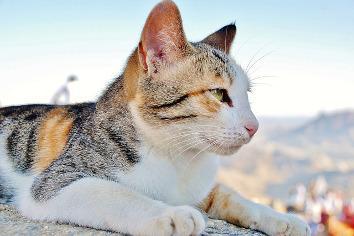 Wie Alt Werden Katzen Wie Alt Ist Meine Katze Altersbestimmung F 252 R Katzen Markt De