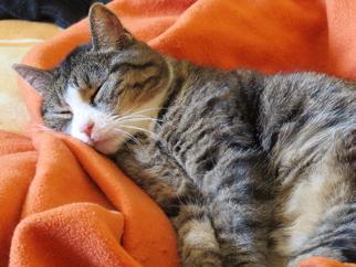 was tun wenn die katze durchfall hat hilfe und tipps bei katzendurchfall. Black Bedroom Furniture Sets. Home Design Ideas