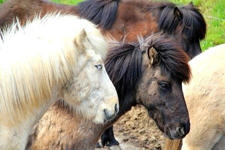 ratgeber pferde general schlachtpferd kaufen tiere retten