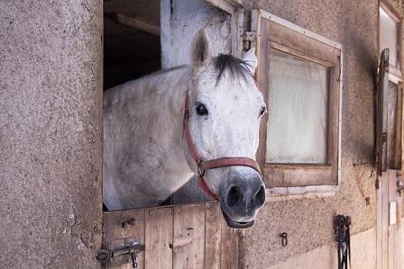 gesundheitscheck bei pferden was muss ich beachten. Black Bedroom Furniture Sets. Home Design Ideas