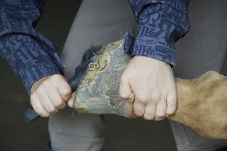 Reitbeteiligung Pferd Vorlage Vertrag