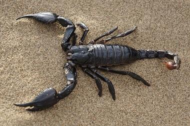 welcher partner passt zum sternzeichen skorpion. Black Bedroom Furniture Sets. Home Design Ideas