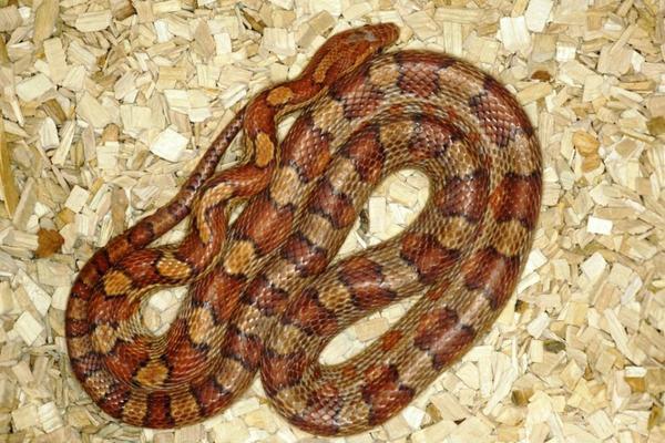 Beliebte Schlangenarten  So treffen Sie eine richtige