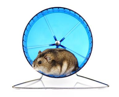 Bild von Hamster im Laufrad