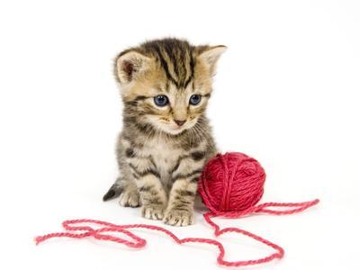 100 Cats kostenlos spielen | Online-Slot.de