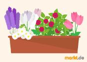 Blumen Grafik