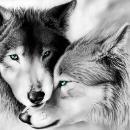 wolfshund2008