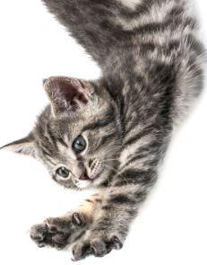 Kratzen wollen Katzen