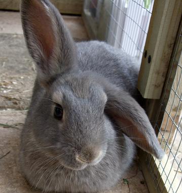 kaninchen tipps zu pflege kaninchenstall uvm. Black Bedroom Furniture Sets. Home Design Ideas